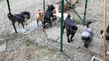 gez-arezzo-50-cani-accumulatrice-13
