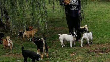 gez-arezzo-50-cani-accumulatrice-9