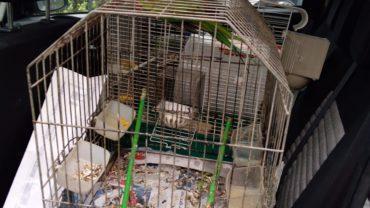genova-gez-recupero-uccellini-2-1600x1200