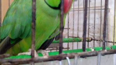 uccellini-salvati-genova-gez-1-1600x1200