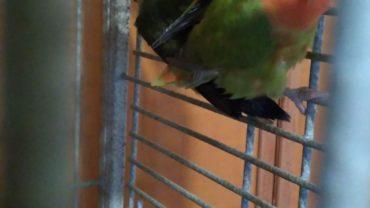 uccellini-salvati-genova-gez-2-1600x1200