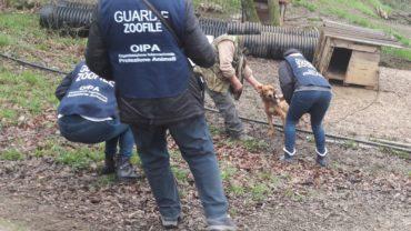 roma-operazione-spartacus-cani-da-caccia-43-1600x1200