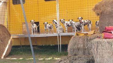 rovigo-gez-aiuti-agli-animali-2-1600x1200