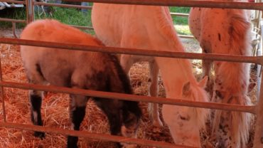 rovigo-gez-aiuti-agli-animali-7-1600x1200
