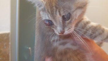 gattini-gez-piacenza-2-1600x1200