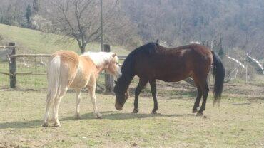 farruco-cavallo-salvato-dal-macello-1