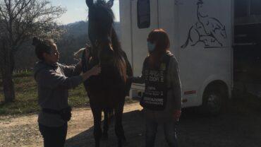 farruco-cavallo-salvato-dal-macello-7