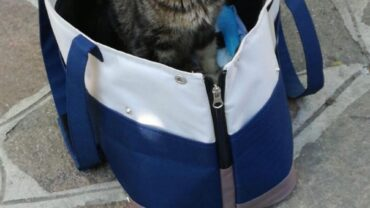 titti-gattina-paralizzata-gez-bergamo-4-1600x1200